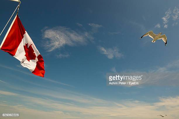 low angle view of seagull flying by canadian flag against sky - canadian flag stock pictures, royalty-free photos & images