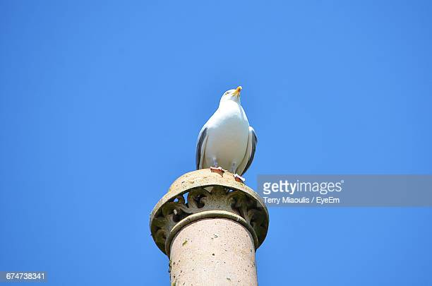 Low Angle View Of Seagull Perching On Smoke Stack Against Clear Blue Sky During Sunny Day
