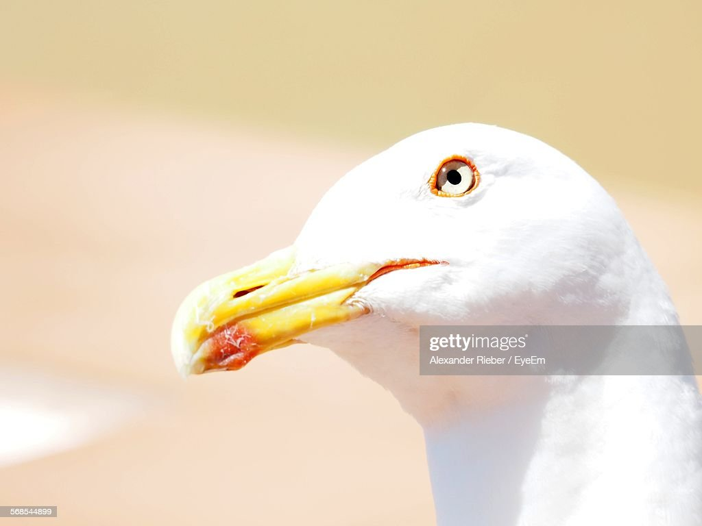 Low Angle View Of Seagull Perching Outdoors : Stock Photo