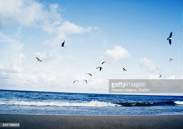 Low Angle View Of Seagulls Flying Above Sea
