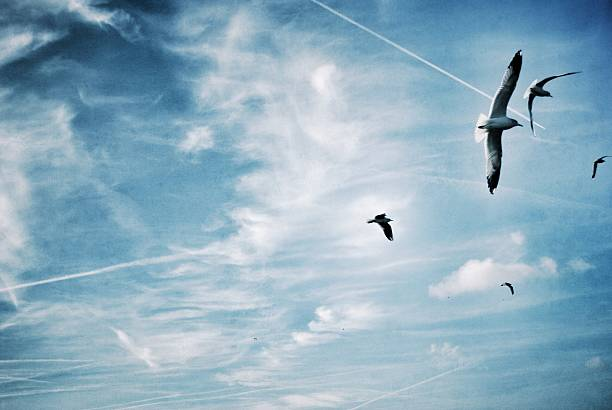 Low Angle View Of Seagulls Flying Against Blue Sky Wall Art