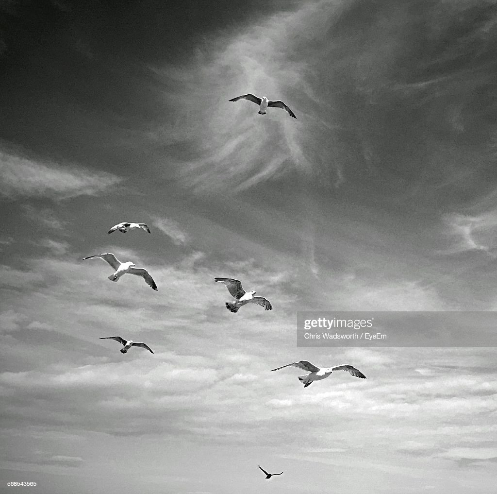 Low Angle View Of Seagulls Flying Against Sky : Stock Photo