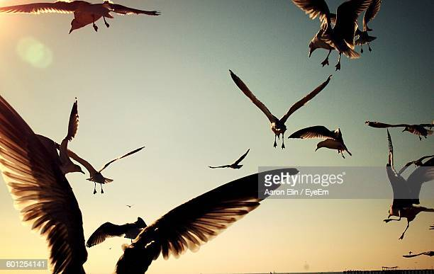 low angle view of seagulls flying against sky - ブルックリン コニー・アイランド ストックフォトと画像