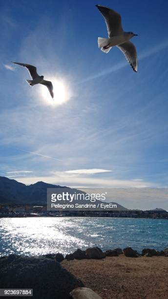 Low Angle View Of Seagulls Flying Over Beach Against Blue Sky