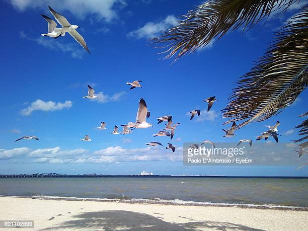 Low Angle View Of Seagulls Flying Over Beach Against Sky