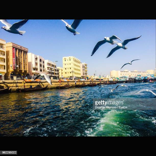 low angle view of seagulls flying over river in city - large group of animals stock pictures, royalty-free photos & images