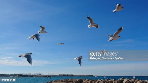 Low Angle View Of Seagulls Flying Over Sea Against Blue Sky