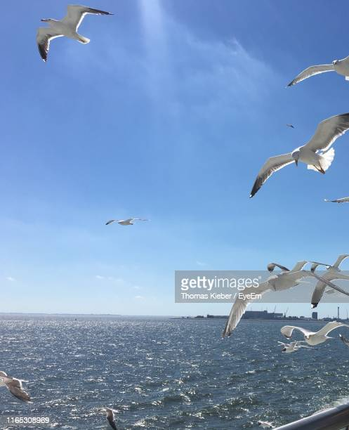 low angle view of seagulls flying over sea against sky - zeevogel stockfoto's en -beelden