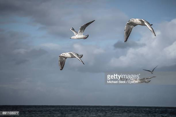 low angle view of seagulls flying over sea against sky - cinq animaux photos et images de collection