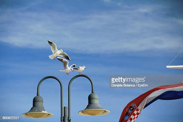 Low Angle View Of Seagulls Over Street Light
