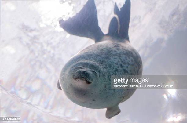 Low Angle View Of Seal Swimming In Water