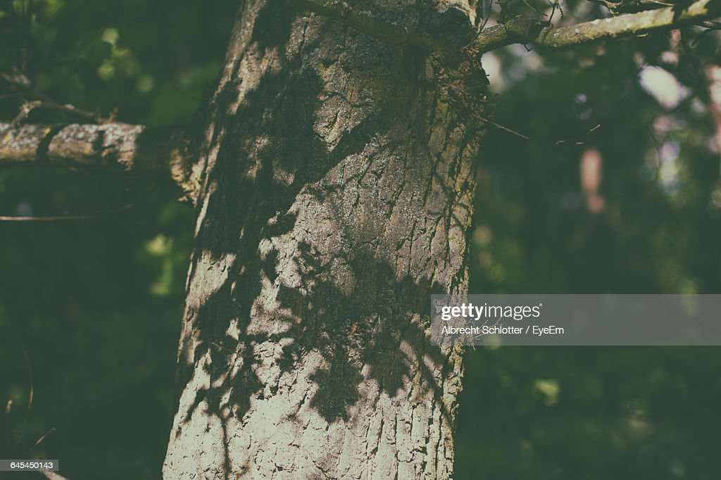 Low Angle View Of Shadows On Tree : Stock-Foto