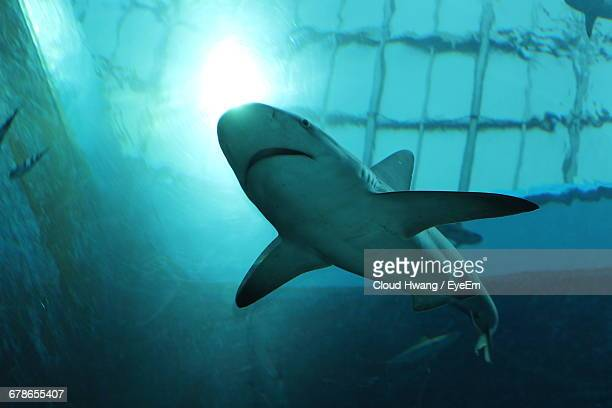 low angle view of sharks swimming in tank at aquarium - shark tank stock photos and pictures