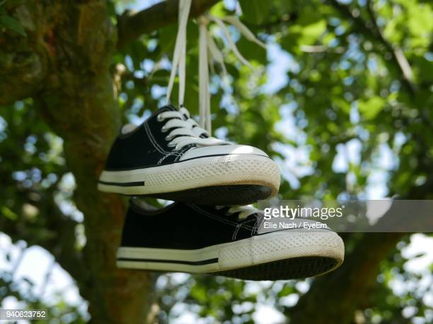 Low Angle View Of Shoes Hanging On Tree