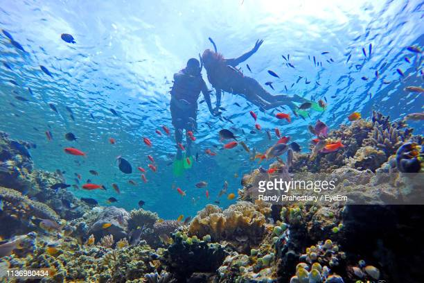 low angle view of siblings swimming by fish in sea - underwater diving ストックフォトと画像