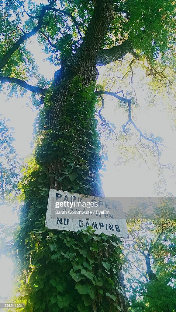 Low Angle View Of Sign Board And Ivy On Tree : Stock Photo