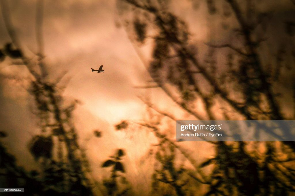 Low Angle View Of Silhouette Airplane And Trees Against Sky During Sunset : Stock Photo