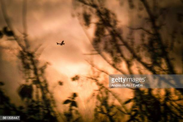low angle view of silhouette airplane and trees against sky during sunset - andres ruffo stock-fotos und bilder