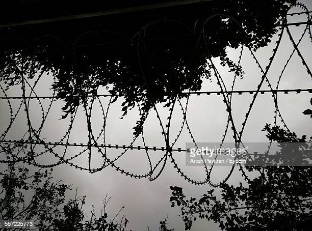 Low Angle View Of Silhouette Barb Wire By Trees Against Sky