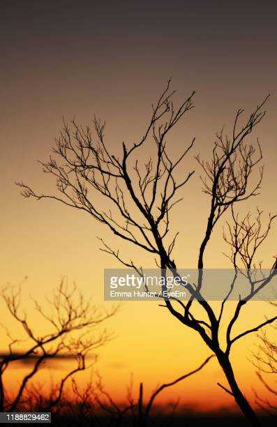 low angle view of silhouette bare tree against orange sky - emma hunter eye em stock photos and pictures