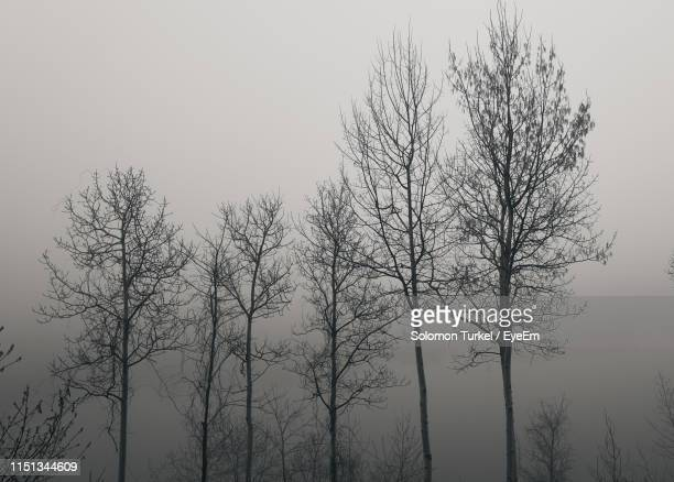 low angle view of silhouette bare tree against sky - solomon turkel stock pictures, royalty-free photos & images