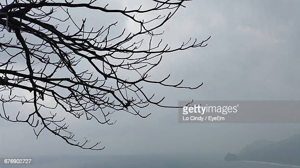 Low Angle View Of Silhouette Bare Tree By Sea During Foggy Weather