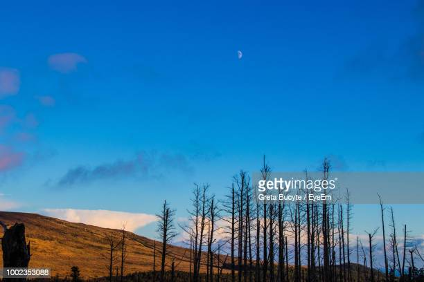 Low Angle View Of Silhouette Bare Trees Against Blue Sky