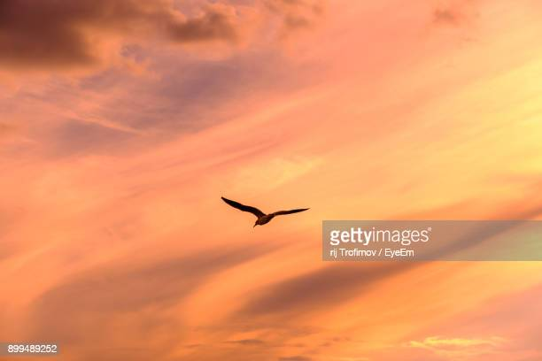 Low Angle View Of Silhouette Bird Flying Against Orange Sky