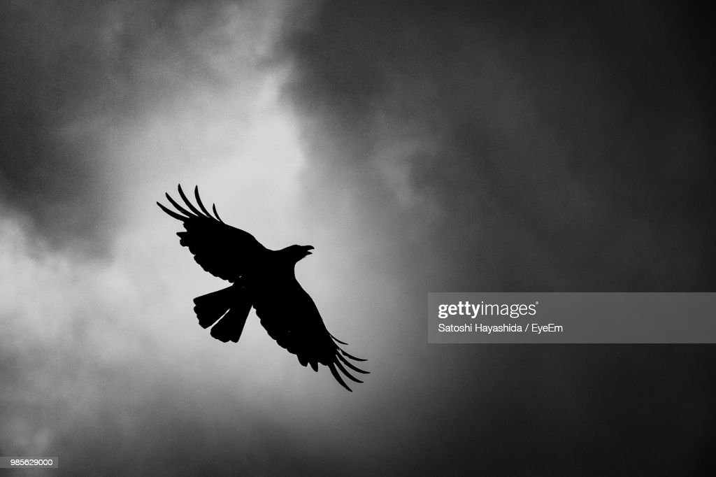 Low Angle View Of Silhouette Bird Flying Against Sky : Foto stock