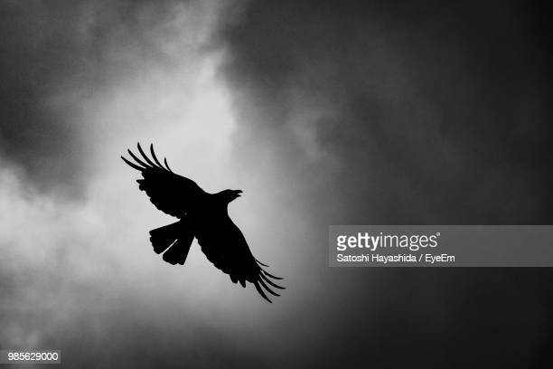 low angle view of silhouette bird flying against sky - ureshino saga stock pictures, royalty-free photos & images
