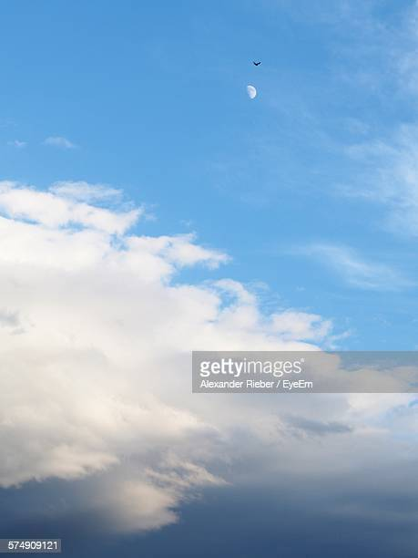 Low Angle View Of Silhouette Bird Flying In Sky With Half Moon