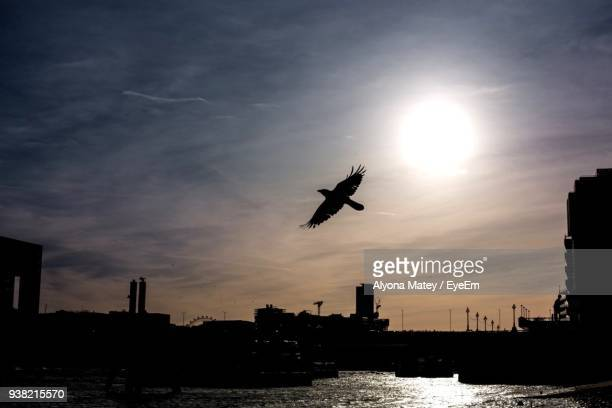 Low Angle View Of Silhouette Bird Flying Over Sea Against Sky