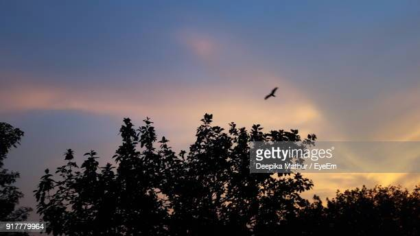 Low Angle View Of Silhouette Bird Flying Over Tree Against Sky During Sunset
