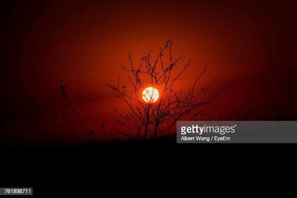 Low Angle View Of Silhouette Bird On Branch Against Sky During Sunset