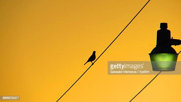 low angle view of silhouette bird perching on cable against clear sky during sunset - yellow perch stock photos and pictures
