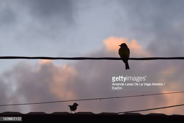 Low Angle View Of Silhouette Bird Perching On Cable Against Sky During Sunset