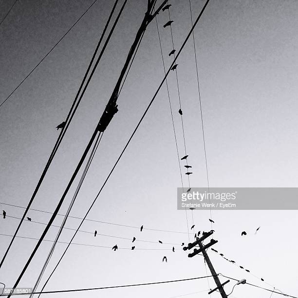 Low Angle View Of Silhouette Bird Perching On Cable Against Sky