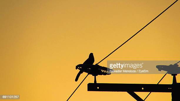 Low Angle View Of Silhouette Bird Perching On Electricity Pylon Against Clear Sky During Sunset