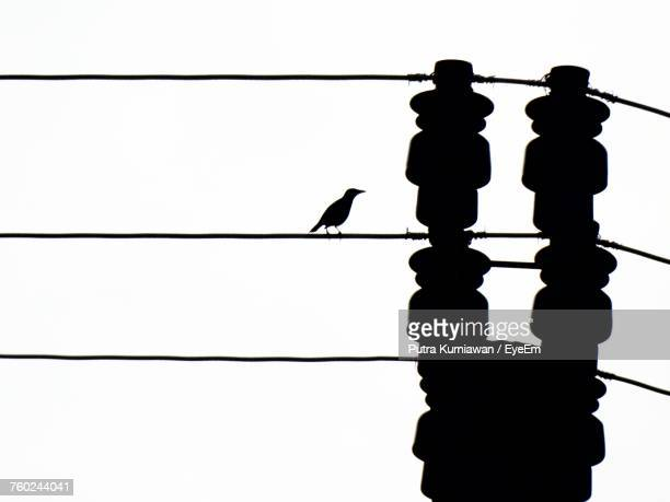 Low Angle View Of Silhouette Bird Perching On Electricity Pylon Against Sky