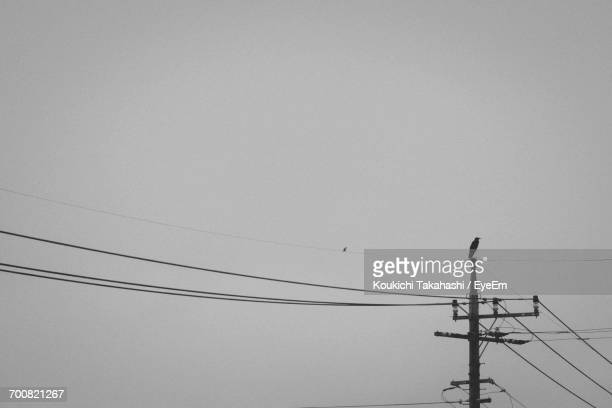 low angle view of silhouette bird perching on power line against clear sky - koukichi koukichi stock photos and pictures