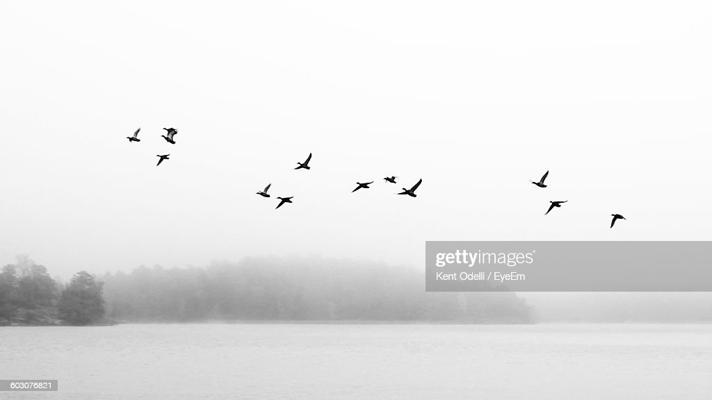 Low Angle View Of Silhouette Birds Flying Above Lake : Stock-Foto