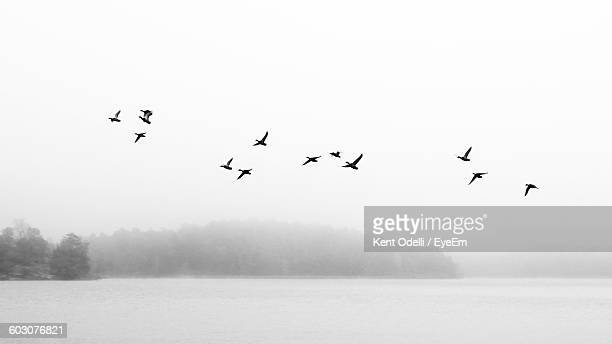 low angle view of silhouette birds flying above lake - bird stock photos and pictures
