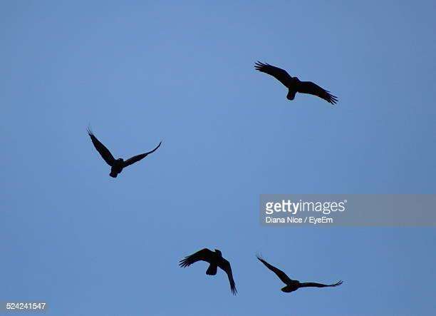 Low Angle View of Silhouette Birds Flying Against Clear Blue Sky