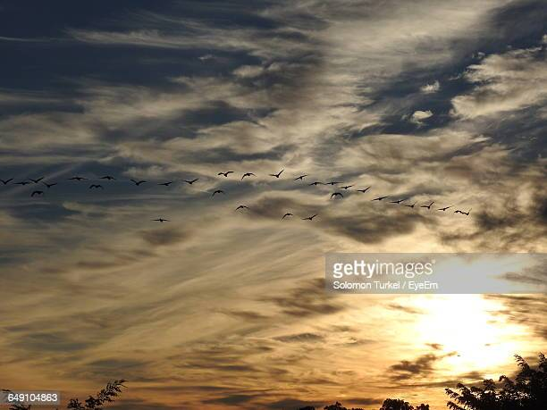 low angle view of silhouette birds flying against cloudy sky during sunset - solomon turkel stock pictures, royalty-free photos & images