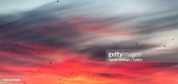 Low Angle View Of Silhouette Birds Flying Against Dramatic Sky