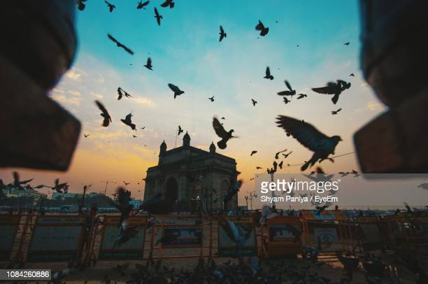 low angle view of silhouette birds flying against gateway to india - mumbai stock pictures, royalty-free photos & images