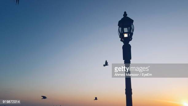 Low Angle View Of Silhouette Birds Flying Against Illuminated Street Light Against Sky