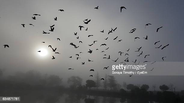 Low Angle View Of Silhouette Birds Flying Against Sky During Foggy Weather