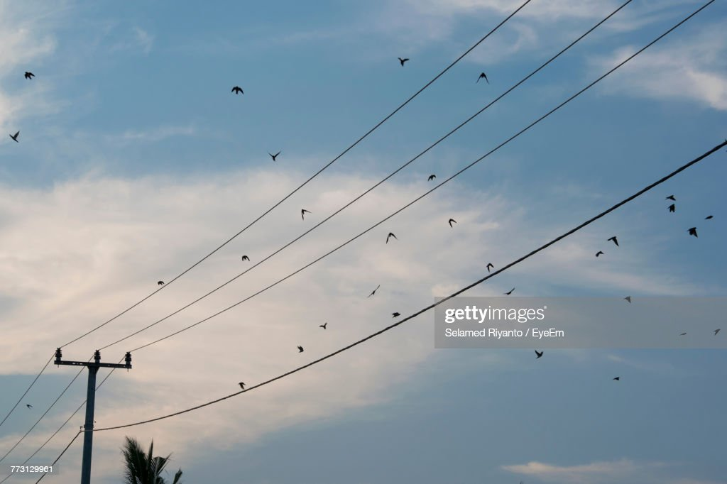 Low Angle View Of Silhouette Birds Flying In Sky : Photo