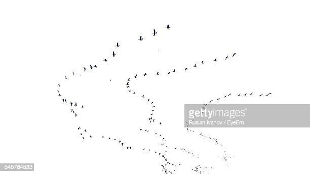 low angle view of silhouette birds flying in v-formation against clear sky - birds flying stock photos and pictures
